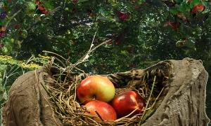 Installation-12-Dagmara-Orchard-