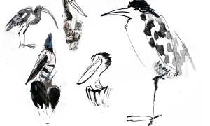 A collection of grumpy grey birds copy