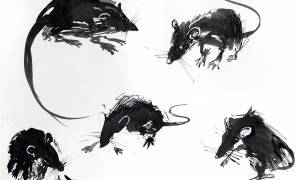 Rats, pen&ink on paper