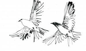 Two-doves-flying