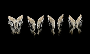 Video-mapped-Moth-like-wings-flapping-inside-the-Meat-Safe